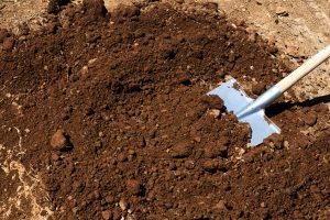 Shovel into soil.
